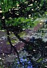 Natures Abstract by Deborah Crew-Johnson