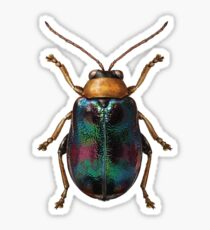 Green beetle Sticker