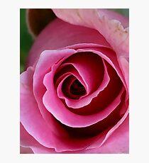 Unfolding Rose Photographic Print