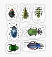 Beetle stickers set Sticker
