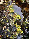 Water Lace by Deborah Crew-Johnson