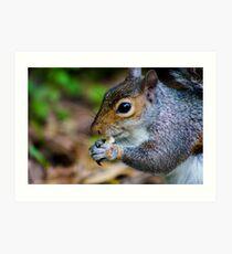 close up of a squirrel Art Print