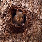 NUTS ? by Richard G Witham