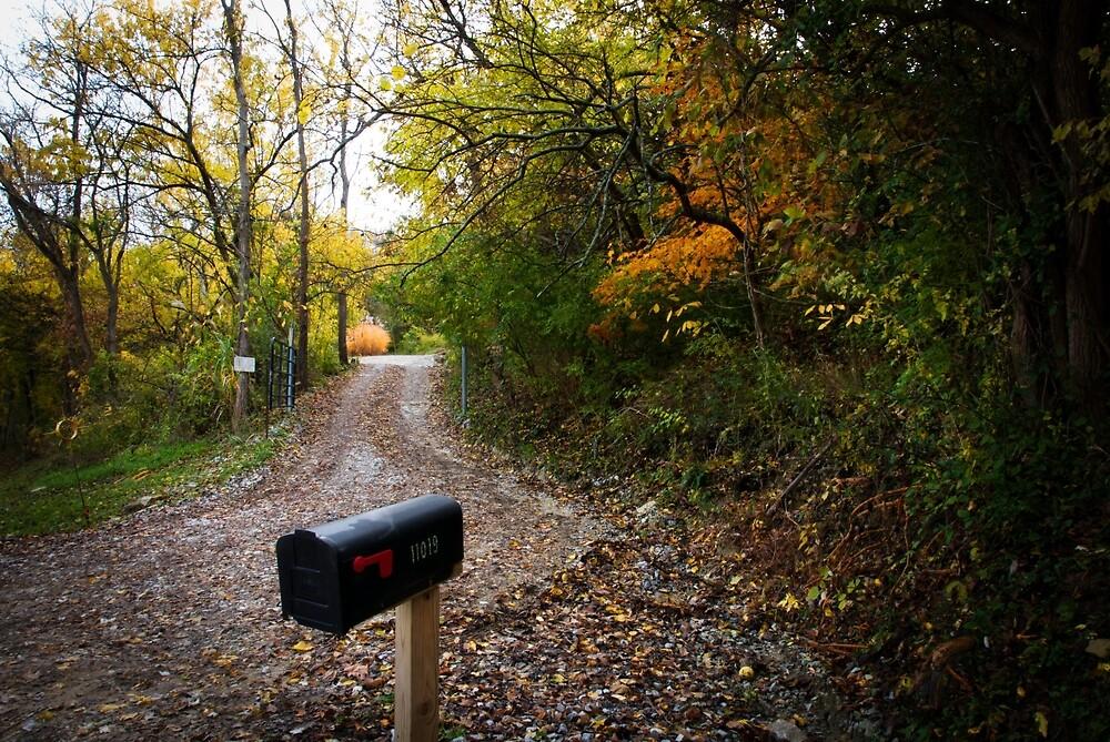 Fall Morning Walk by Jeanne Sheridan