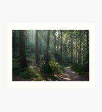 Saxony Forest Art Print