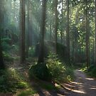 Saxony Forest by Michael Breitung