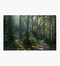 Saxony Forest Photographic Print