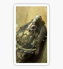 Alligator Snapping Turtle Sticker