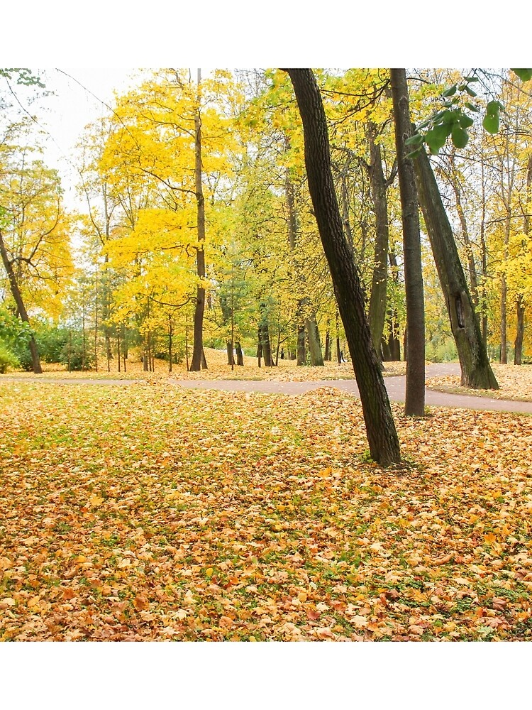 Yellow autumn park. by GermanS