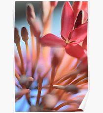 Tropical Flowers Macro Poster