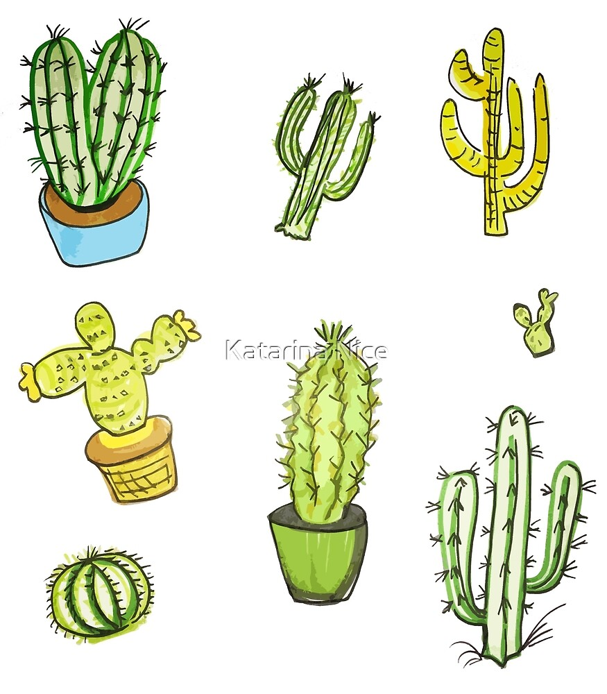 cactus- a thick fleshy stem which typically bears spines by Katarina Nice