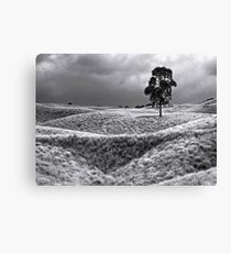 Field of Saddle Road Dreams 2 Canvas Print