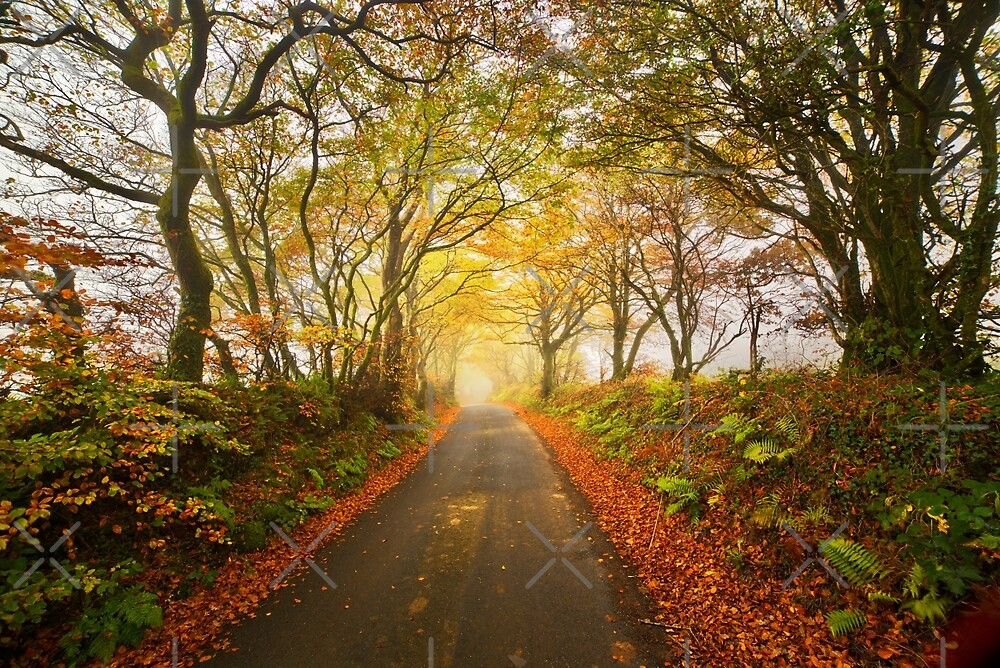 Autumnal devon lane by Sebastien Coell