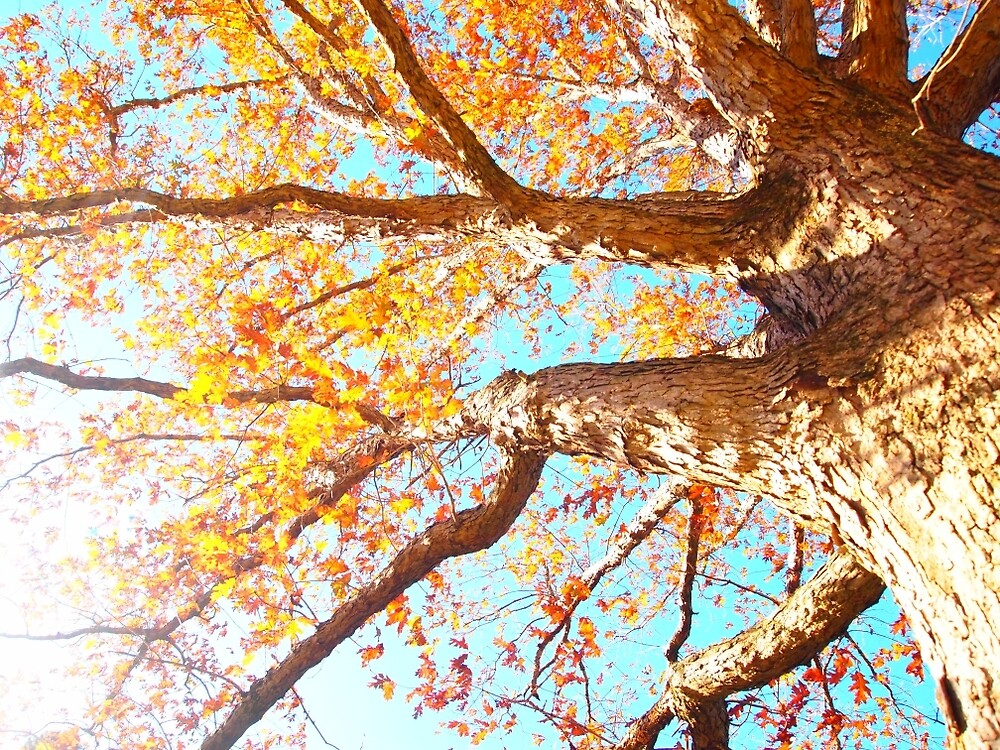 Bright Autumn Tree photo by crystalm0th