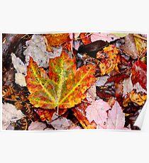 Leaf Litter III Poster