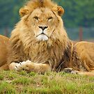 Pride by Andy Beattie