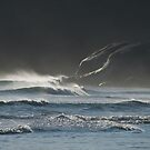 Stormy Evening at Wilsons Promontory by johnrf