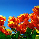 The Colours of Summer. by malcblue
