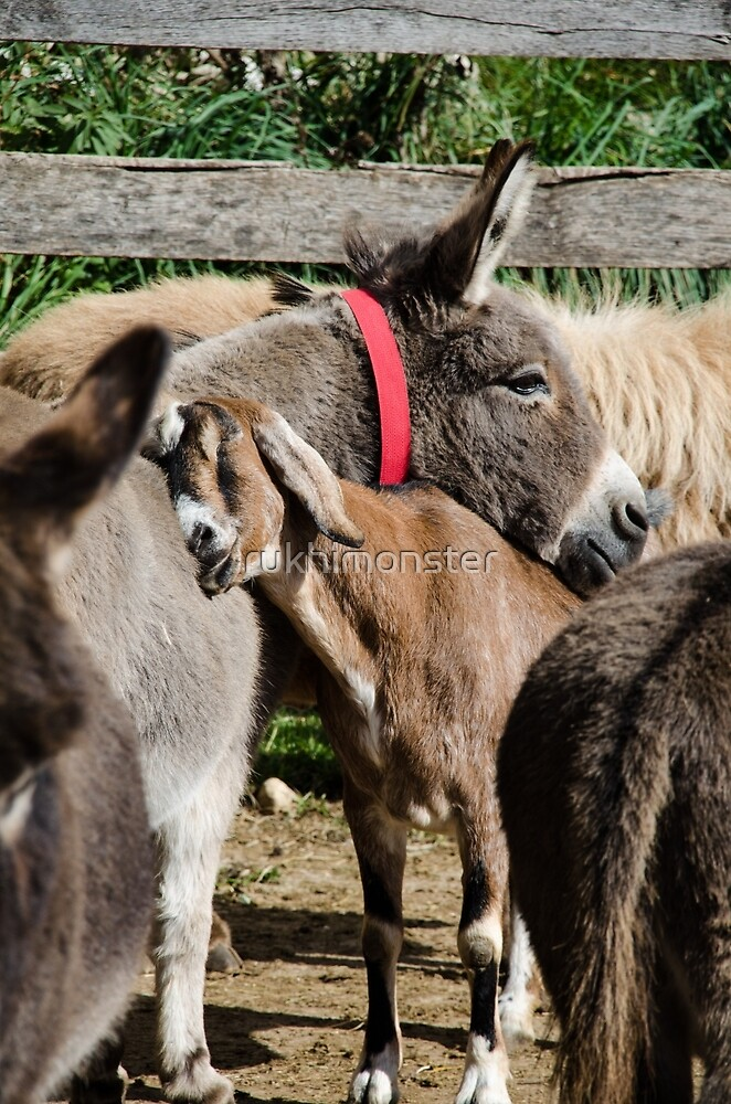 Katie and Katy Donkey Sanctuary by rukhimonster