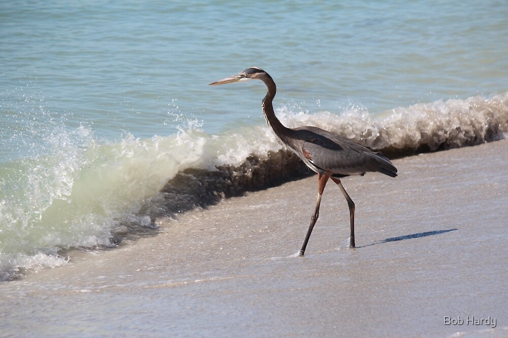 Beach Heron by Bob Hardy