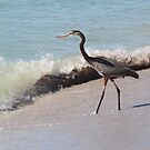 Beach Heron by Bob Hardy