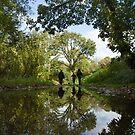 walk reflections by DARREL NEAVES