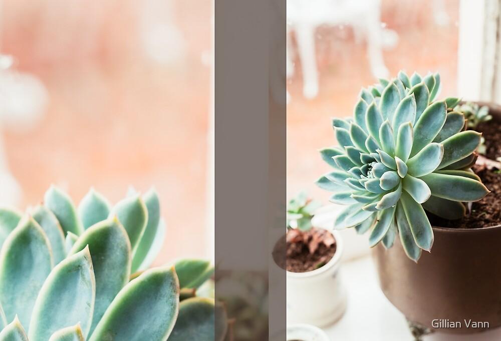 succulent Journal by Gillian Vann