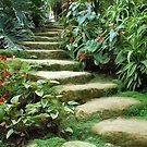 Tropical steps by Arie Koene
