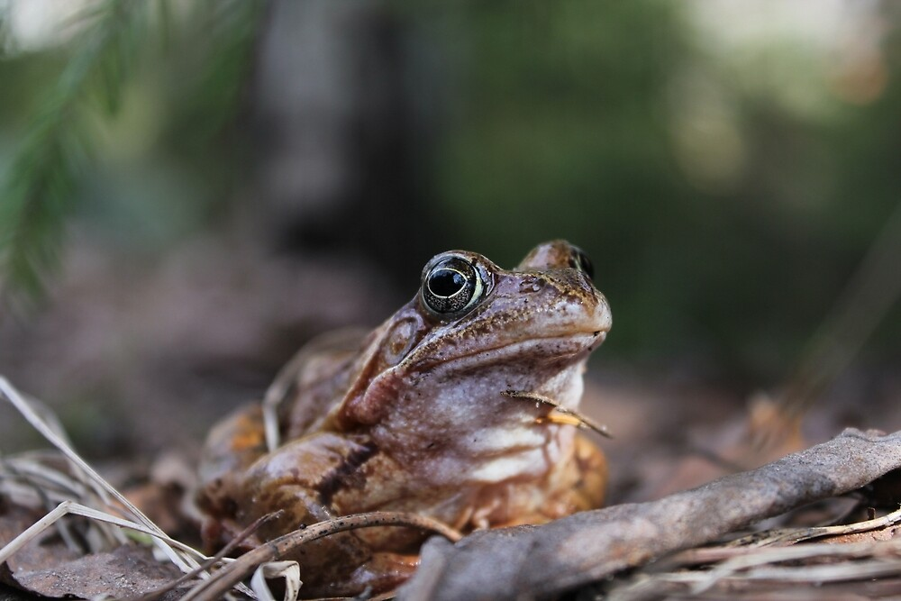 Portrait of a frog. by GermanS