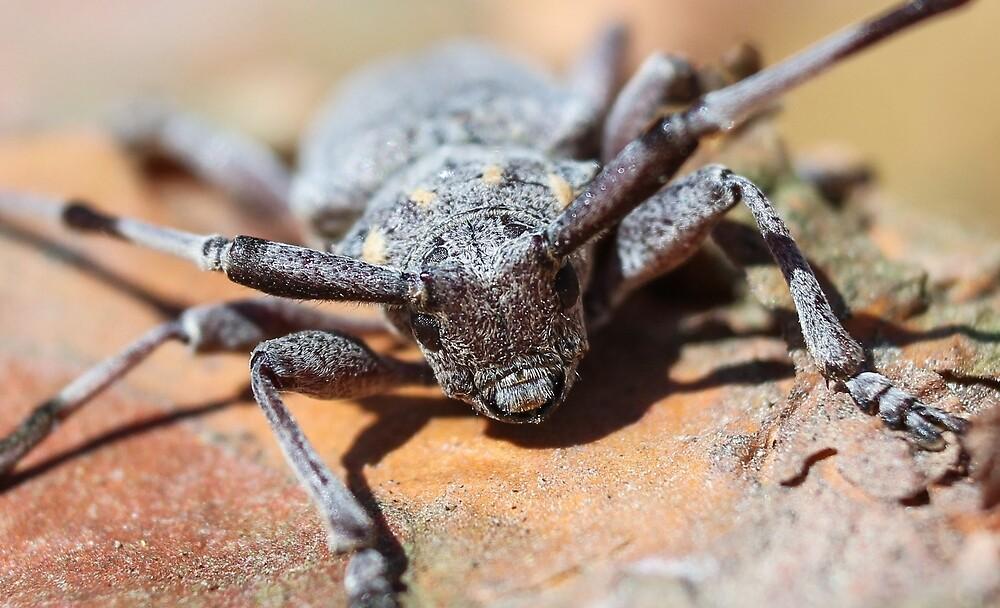 Beetle barbel. by GermanS