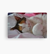 Sleeping Buffy Canvas Print