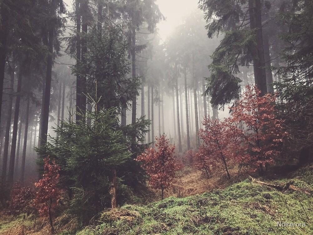 Forest II by Noirerora