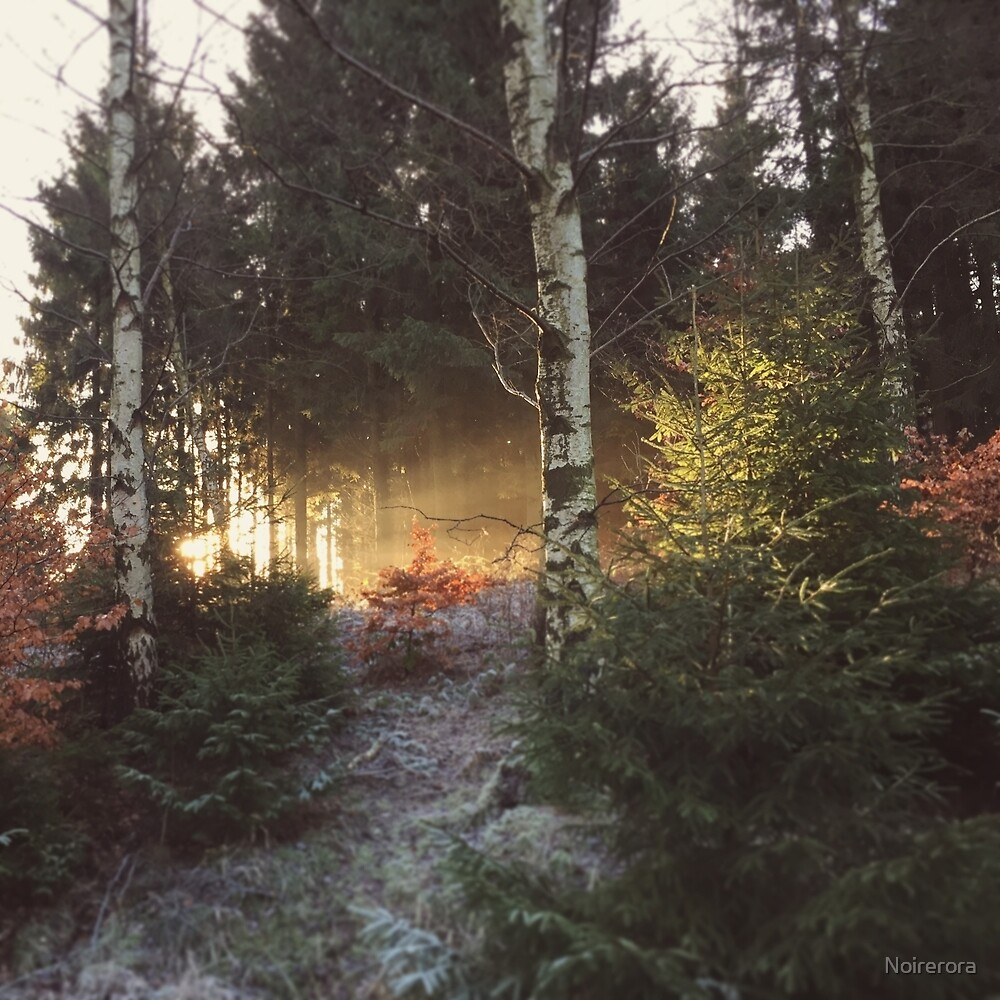 Sparse woods by Noirerora