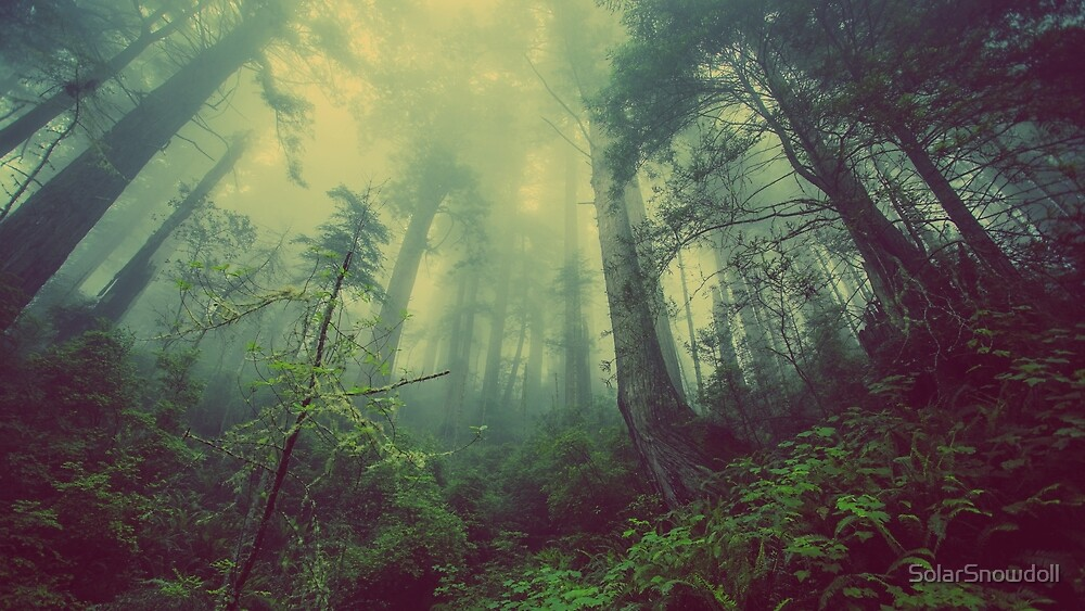 Misty Forest by SolarSnowdoll