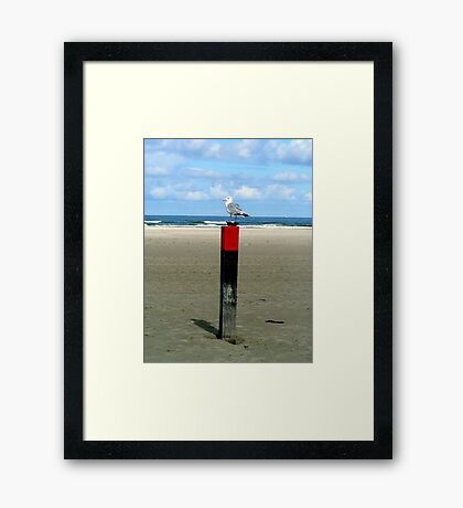 Rusty lock case guarded by a Seagull  Framed Print