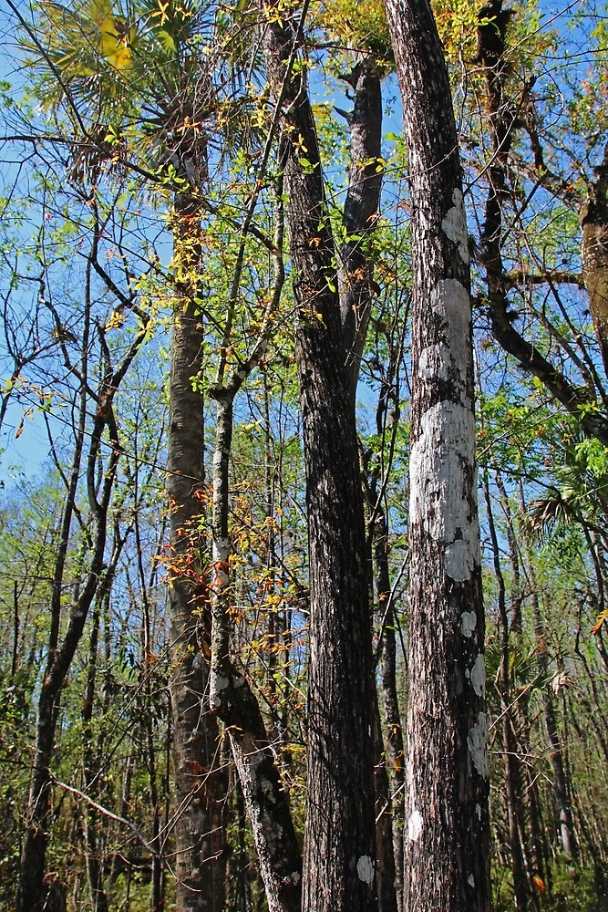 Cypress Poem by Michiale