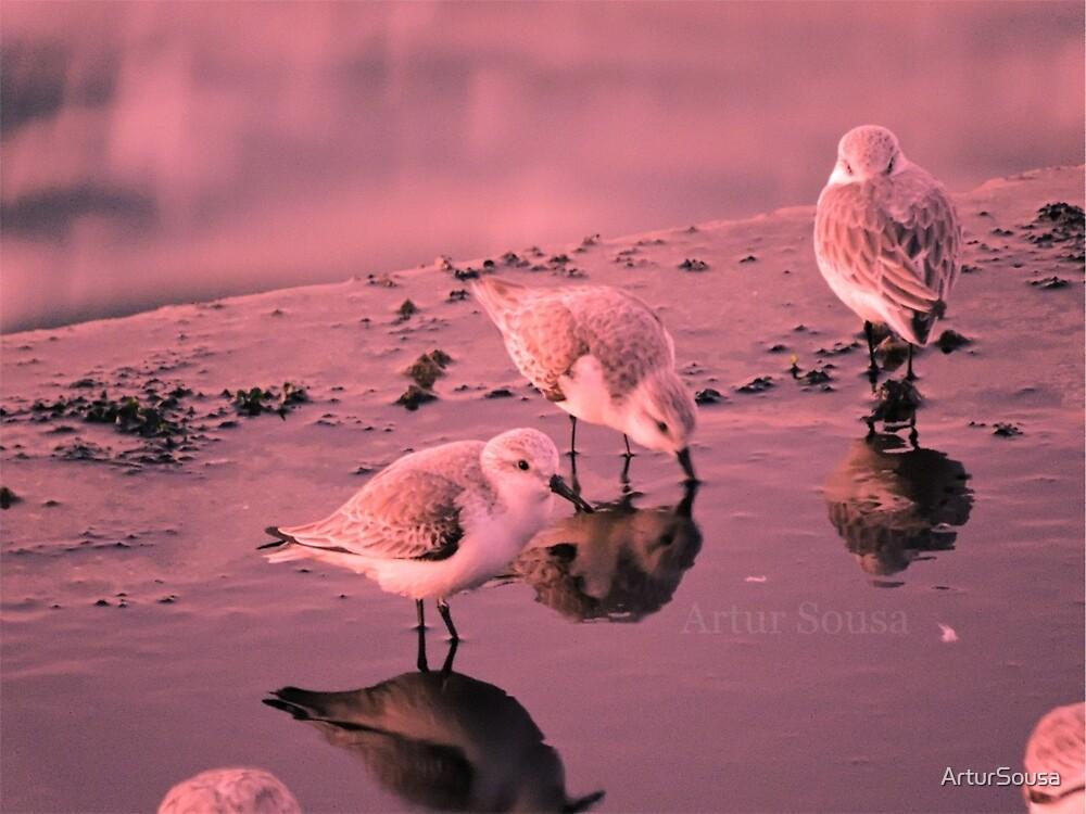 Birds Life by ArturSousa