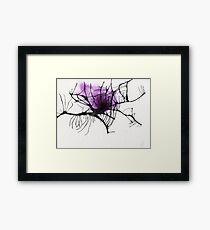 Spiders web Framed Print