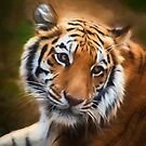Painted Tiger by Amy Jackson