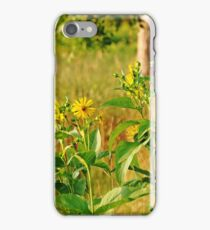 Golden Yellow Ray Florets iPhone Case/Skin