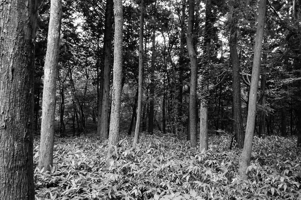Hallasan National Park (한라산국립공원) by Michael Stocks
