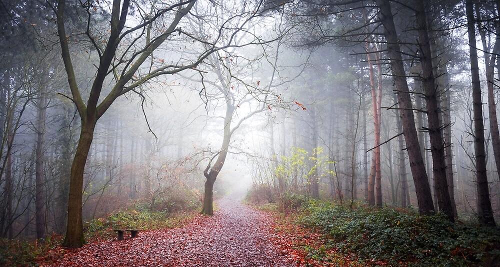 Forest Fog by Svetlana Sewell