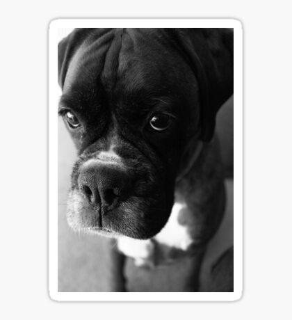 Kannst du nicht sagen ... Es war nicht ich ... - Boxer Dogs Series Sticker