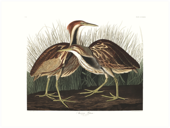 American Bittern - John James Audubon by billythekidtees