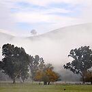 Morning Mist by STEPHANIE STENGEL | STELONATURE PHOTOGRAPHY
