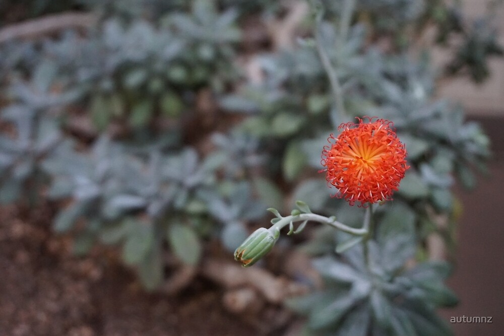 Close Up Flower by autumnz
