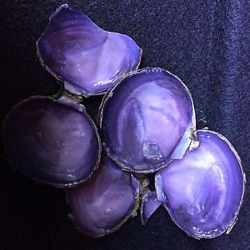 Purple Shells by Lgolby