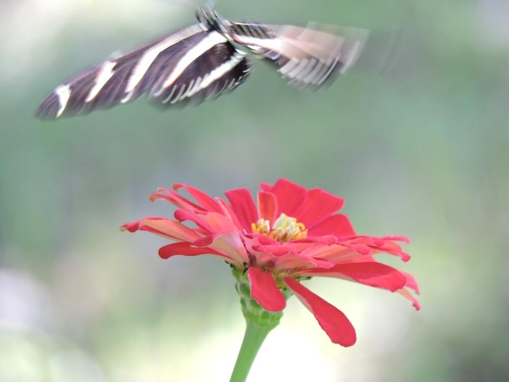 Butterfly Macro 2 by kayla30