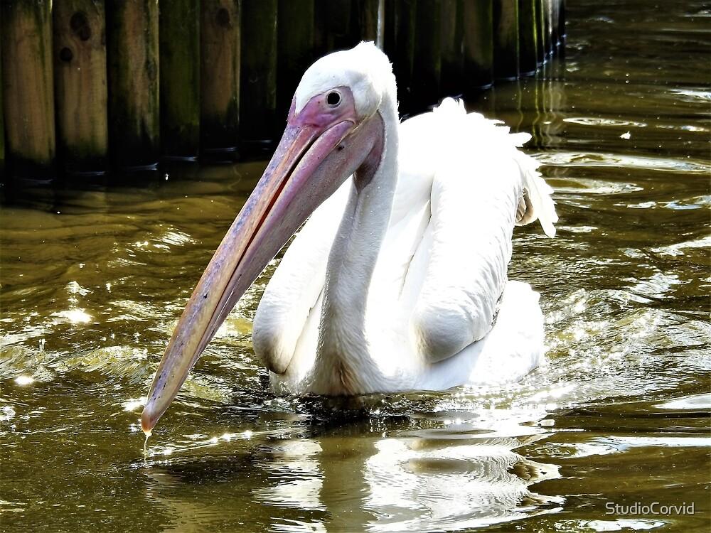 Pelican by StudioCorvid