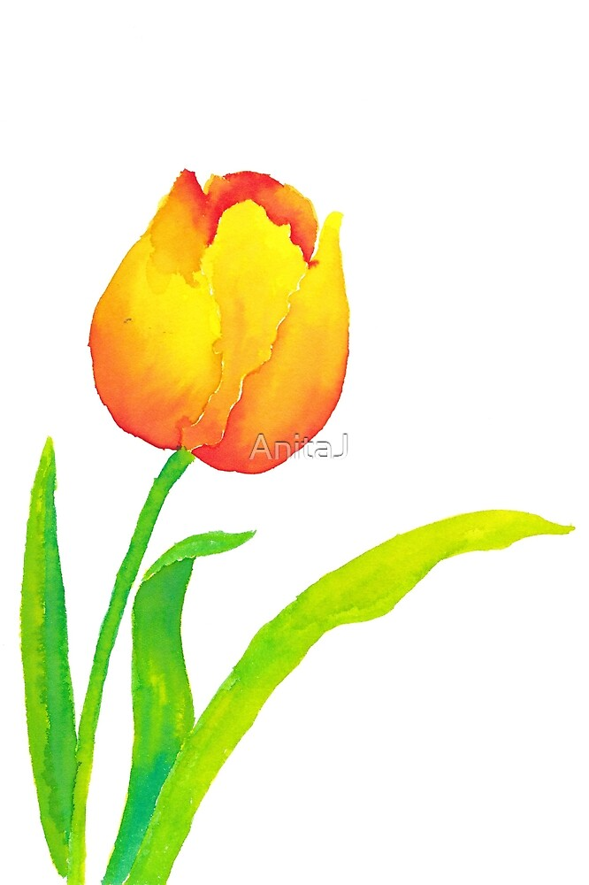 Tulip Yellow/Red by AnitaJ